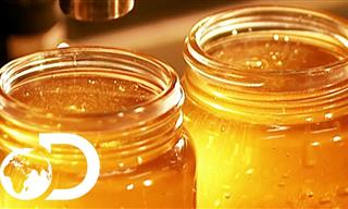 There Are SO Many Interesting Steps in the Making of Honey