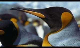 The Penguin Family Super Power - Amazing!