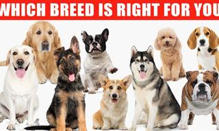 Dog Breeds: Detailed Reviews of 10 Most Popular Dogs