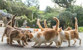 The Secret Lives of Japanese Street Cats