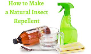 Want Natural Ways to Keep Pests Away? Check These Out!