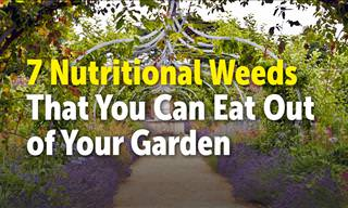 7 Nutritional Weeds You Can Eat From Your Garden