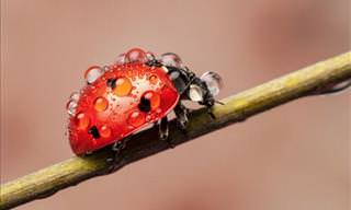 Jaw-Dropping Photos of the Wonderful Lives of Ladybugs