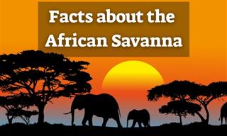 7 Intriguing Facts You Didn't Know About the African Savanna