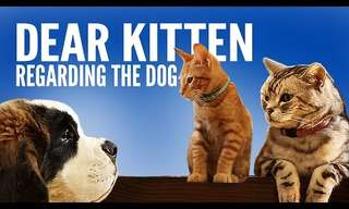 Dear Kitten: Talking About the Dog