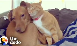 A Dog Turns to a Cat For Comfort and a Friendship Blossoms