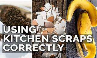 The DO'S & DON'TS Of Using Food Scraps in the Garden