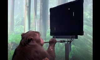 Monkey Plays Pong By Connecting Its Mind to a Computer