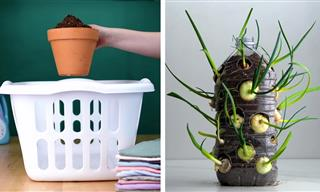 These Plant Hacks Look Odd at First, But They Really Work!