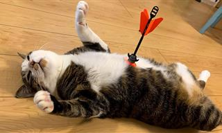 Funny Pets: These Animals Can't Stop Their Theatrics