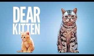 Hilarious 'Older Cat Advice'