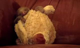 Adorable Video from a Baby Sloth Orphanage