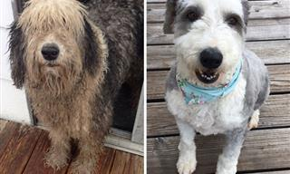 A Little Grooming Turned These Dogs Unrecognizable!