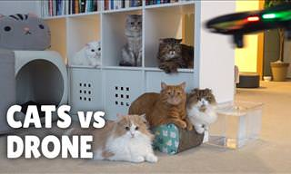 Adorable: Cats vs. Drones