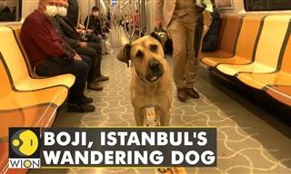 This Wandering Dog Loves Long Journeys by Public Transport