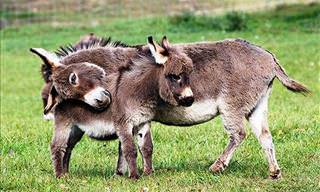 20 Cute & Cuddly Baby Donkeys