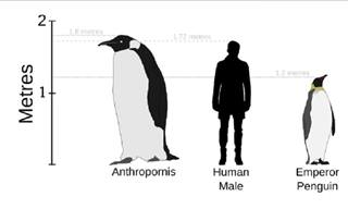 27 Stunning Species of Penguin. Both Living and Extinct