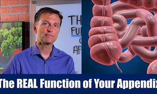 What Does the Appendix Actually DO?