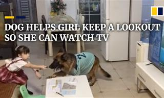 This Dog and Girl Have Formed an Amusing Collaboration