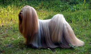 17 Animals with Gorgeous Hair
