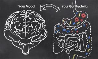 Can Probiotics Improve Mental Health?