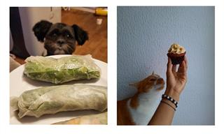 These Cute Pets Can't Take Their Eyes off The Food Plate