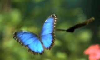 Take a Moment to Relax With Butterflies...