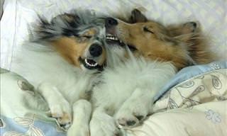 18 Very Sleepy and Comfortable Dogs