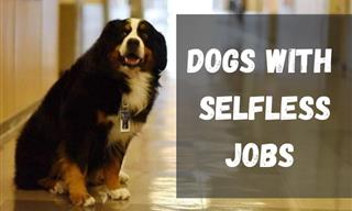Dogs With Jobs: Canines Who Are Greatly Helpful to Humans