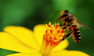Attracting Bees to Your Garden!