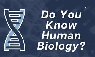 Quiz: How Much Do You About Human Biology?