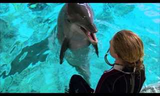 How to Question Dolphins - Fascinating!