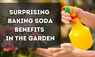 Use Baking Soda to Take Care of Your Garden – 5 Handy Tips