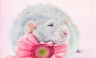 17 Cute Photographs of Rats