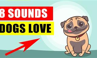 Play These Sounds and See the Cute Reactions of Your Dog
