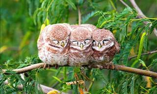 Adorable Photos of Huddling Birds