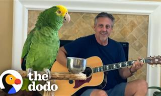This Parrot Loves to Sing Along to the Guitar!