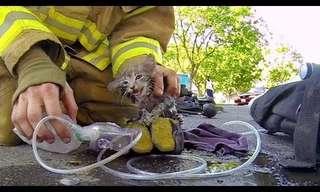 A Hero's Act - Fireman Saves Kitten's life