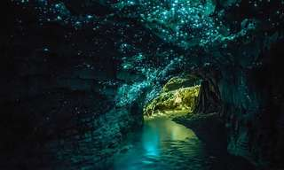 The Glow Worms of New Zealand's Waitomo.