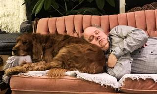 The Purest Love: Grumpy Dads and the Pets They Didn't Want