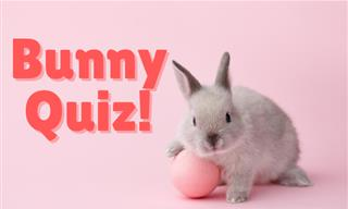 Can You Crack Our Bunny QUIZ?