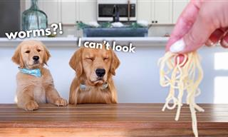 CUTE: Watch This Puppy and His Dad Review Foods