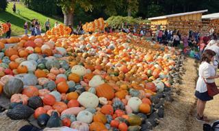 Watch Pumpkin Art Installations at Ludwigsburg Pumpkinfest, Germany