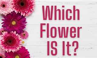 QUIZ: Which Flower IS It?