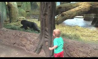 Boy & Gorilla Play Hide & Seek