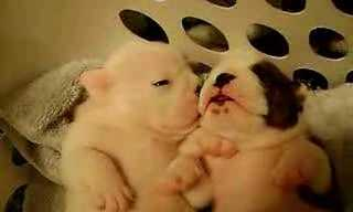 Cute Overload: Dreaming Puppies!