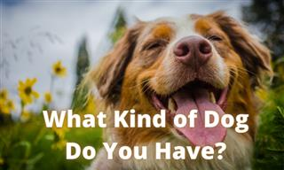 What Personality Does Your Dog Have?