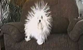 From Poodle to Porcupine - So Cute!