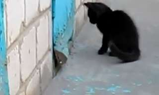 Hell Froze Over: Cat Saves Dog!
