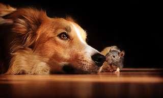 30 Adorable Doggy Photos to Brighten Your Day
